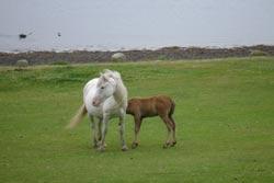 wild-ponies